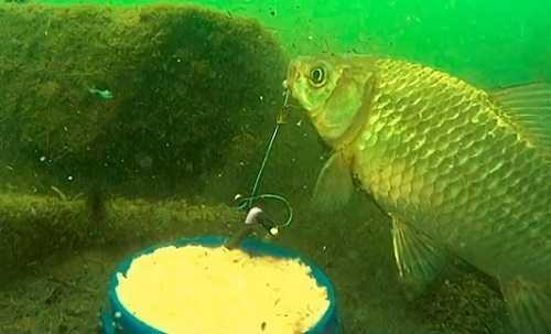 Рыбалка на пробку